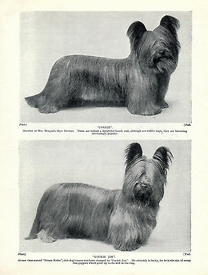 Skye Terrier Two Named Dogs Old Original Dog Print From 1934