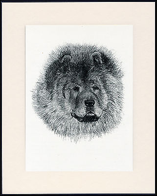 Chow Chow Old Dog Head Study Print From 1935 Mounted Ready To Frame
