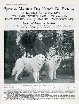 Pyrenean Mountain Dog Breed Kennel Advert Print Page Our Dogs 1951 De Fontenay