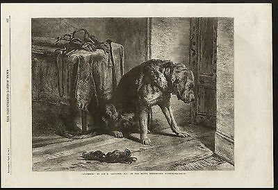 Bloodhound Illustrated London News 1861 Antique Print Engraving
