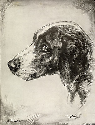 Pointer Head Study Old 1934 Sepia Dog Art Print