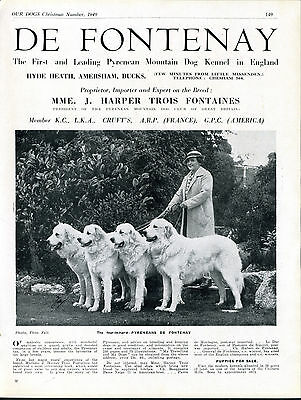 Pyrenean Mountain Dog Our Dogs Old 1949 Breed Kennel Advert Print Page
