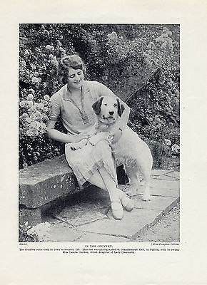 Clumber Spaniel Lady And Her Dog Old Original Dog Print Page From 1934
