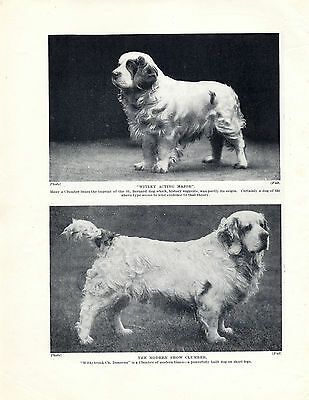 Clumber Spaniel Two Named Dogs Old Original Dog Print Page From 1934