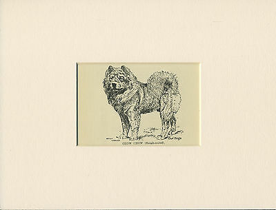 CHOW CHOW ROUGH COATED LITTLE ANTIQUE 1912 DOG PRINT by WARDLE READY MOUNTED