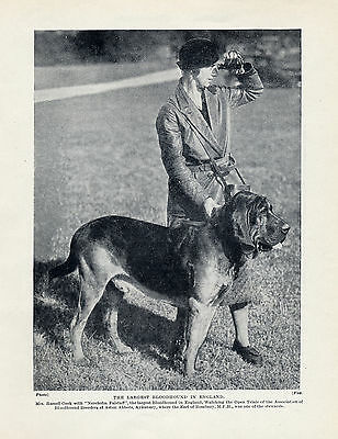 Biggest Bloodhound In England Original Dog Print Page From 1934