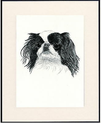 Japanese Chin Old Dog Head Study Print From 1935 Mounted Ready To Frame