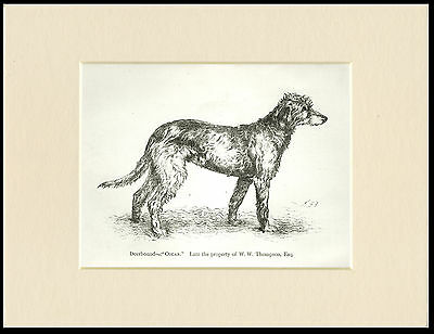 SCOTTISH DEERHOUND OLD STYLE DOG IN MOORLAND SCENE PRINT MOUNTED READY TO FRAME