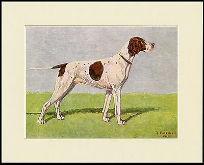 Pointer Lovely Dog Print Mounted Ready To Frame