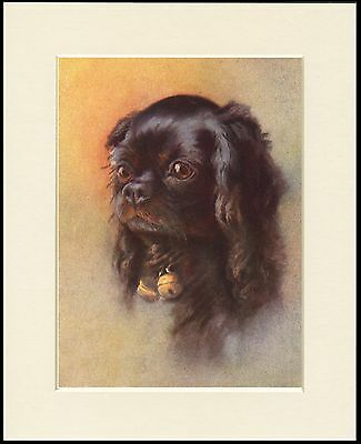 King Charles English Toy Spaniel Head Study Dog Print Mounted Ready To Frame