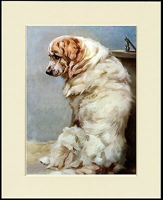 Seated Pyrenean Mountain Dog Lovely Print Mounted Ready To Frame