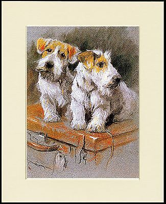 Sealyham Terrier Two Dogs Lovely Dog Print Mounted Ready To Frame