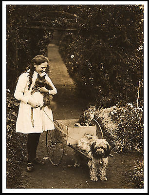 Girl With Tibetan Terrier Pulling A Cart Lovely Vintage Style Dog Print Poster