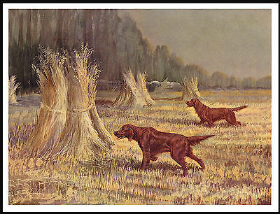 Irish Setter Dogs At Work In Cornfield Vintage Style Dog Print Poster