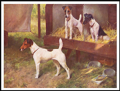 Smooth Fox Terrier Dogs On Show Bench Vintage Style Dog Art Print Poster