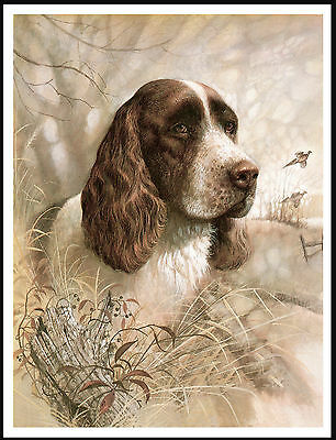 English Springer Spaniel Lovely Vintage Style Dog Head Study Print Poster