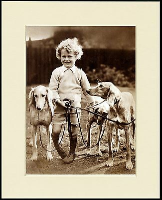 Saluki Little Boy And 3 Hounds Lovely Little Dog Print Mounted Ready To Frame