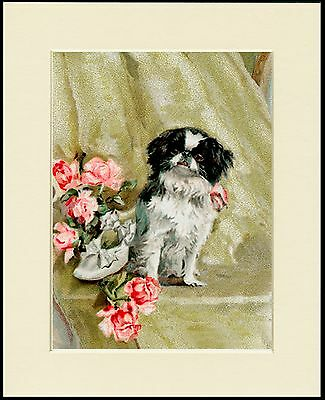 Japanese Chin And Roses Lovely Dog Print Mounted Ready To Frame