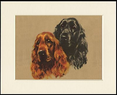 Cocker Spaniel Charming Two Dogs Head Study Dog Print Mounted Ready To Frame