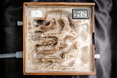Square Wooden Ant Nest with Humidity and Temperature Meter Ant Farm Formicarium