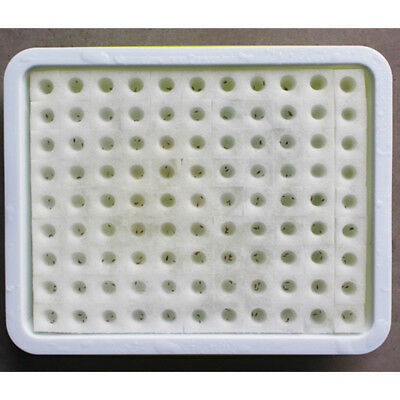 1''x1'' 100Pcs Cubes Sponge For Hydroponic Plant Seed Starting Grow Net Pot Cup