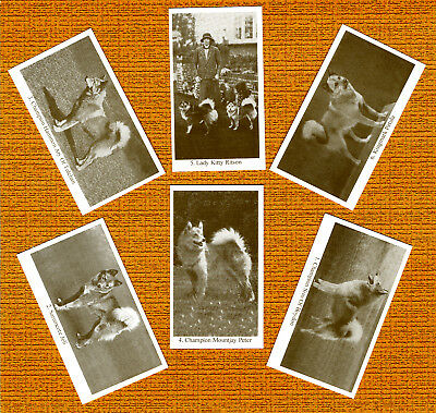 Finnish Spitz A Set of 6 Named Dog Photo Trade Cards