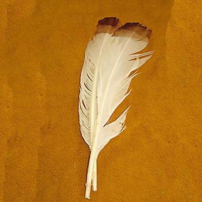 "Imit. Eagle Feathers 12"" White/Brown Tip 6Pk"