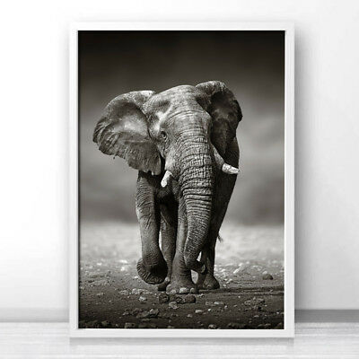 Elephant Canvas Poster Animal Wall Art Prints Nordic Style Picture Home Decor