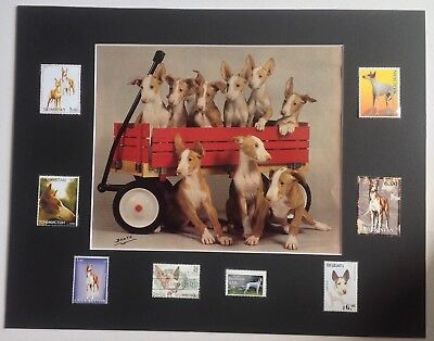 Ibizan Hound, Collectable - DIY Collage - Vintage Magazine Prina