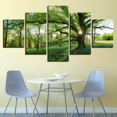 Green Forest Trees Nature Rainforest Sunshine Ray 5 Panel Canvas Print Wall Art