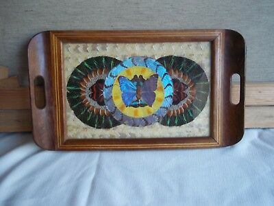 """Antique Butterfly Wing Art inlaid mahogany tray 9"""" by 16"""" made in Brazil 1940s"""