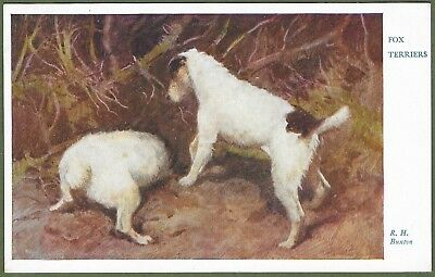 Fox Terriers Digging For Rabbits. Super Card, Artist Drawn by R.H. Buxton.