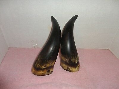 """PAIR OF Natural Cow Bull Horn 10"""" MATCHING IN COLOR AND SIZE"""