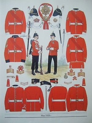 """MILITARY 12"""" x 9"""" PRINT-1881 INFANTRY OF THE LINE -NCOs & PRIVATES  BY B FOSTEN"""