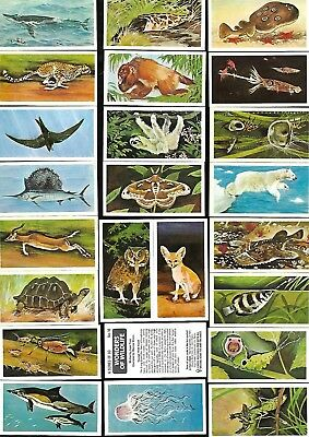 Full Set 50 Wonders Of Wildlife Brooke Bond Cigarette Cards