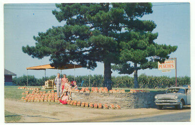 Lake Erie Vacationland Peach Fruit Stand Old Car Vintage Postcard