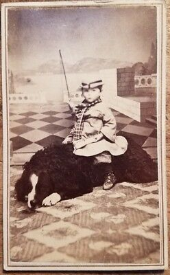 c1870 CDV Photo of Adorable Child with Cane Hat Riding Bernese Mountain Dog ?