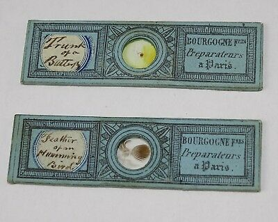 2 Lovely 2.25 x 5/8 inch Victorian Microscope Slides by Bourgogne Brothers
