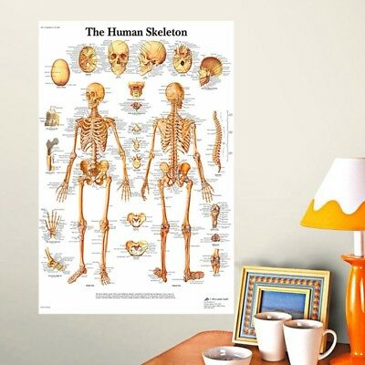 Hot Muscle System Posters Silk Cloth Anatomy Chart Human Body Educational Decor