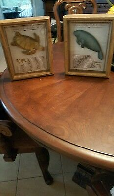 2 Manatee & Seaturtle Collection Set 2 Shadow Box Sculptures