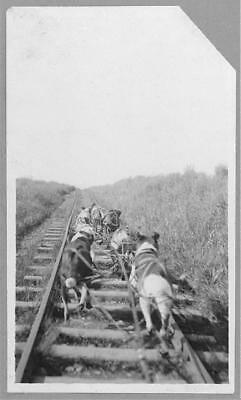 Dogs pulling pupmobile,Dog Team,Nome,Alaska,AK,Railroad Tracks,RR,1900-1916 1