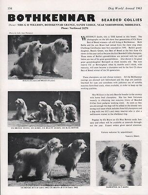 Bearded Collie Dog World 1963 Breed Kennel Advert Print Page Bothkennar Kennel