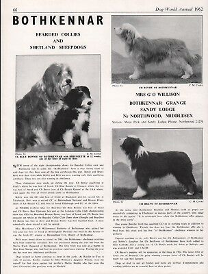Bearded Collie Dog World 1962 Breed Kennel Advert Print Page Bothkennar Kennel