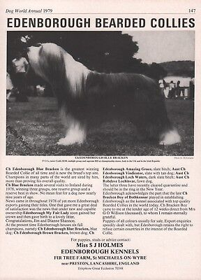Bearded Collie Dog World 1979 Breed Kennel Advert Print Page Edenborough Kennel