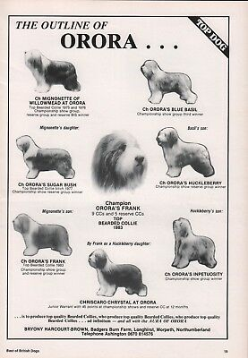 Bearded Collie Dog World 1984 Breed Kennel Advert Print Page Orora Kennel