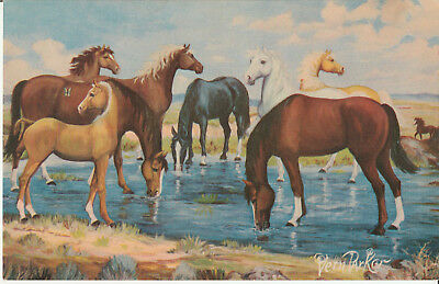 WILD HORSES MUSTANG AT WATERING HOLE  VERN PARKER A/S HORSE jumbo size POSTCARD