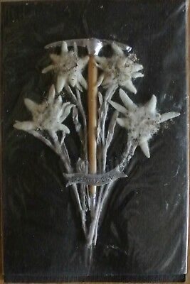Vintage Jaufenpass  2100 M Real Edelweiss Flowers Italy Hiking Souvenir