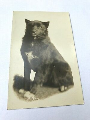 Mail Carrier Dog Nigger Nome AK 1904 RPPC Real Photo Sled Service