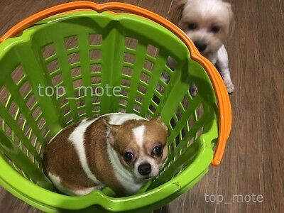 So Cute Dog in Basket DIGITAL PHOTO PICTURE IMAGE WALLPAPER SCREENSAVER DESKTOP