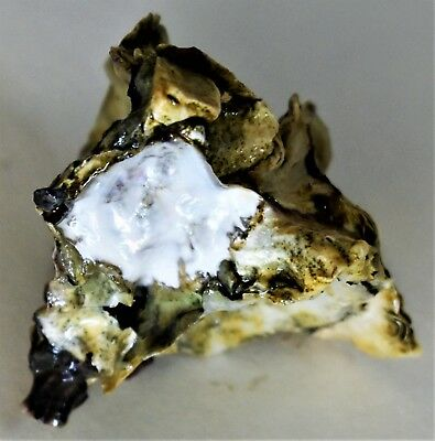Single Oyster Shell 2